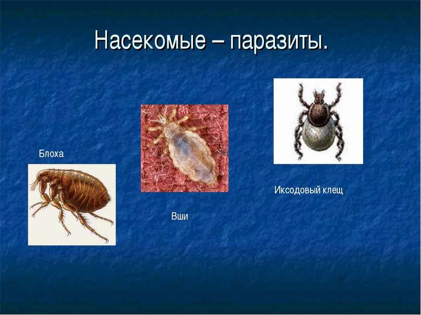 Насекомые – паразиты. Иксодовый клещ Блоха Вши