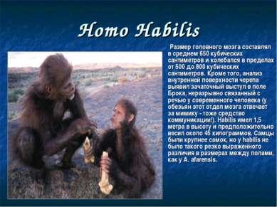 Homo Habilis Размер головного мозга составлял в среднем 650 кубических сантим...