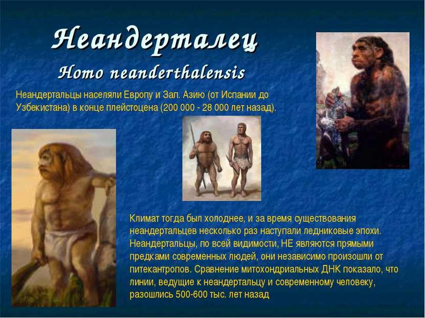 Неандерталец Нomo neanderthalensis Неандертальцы населяли Европу и Зап. Азию ...