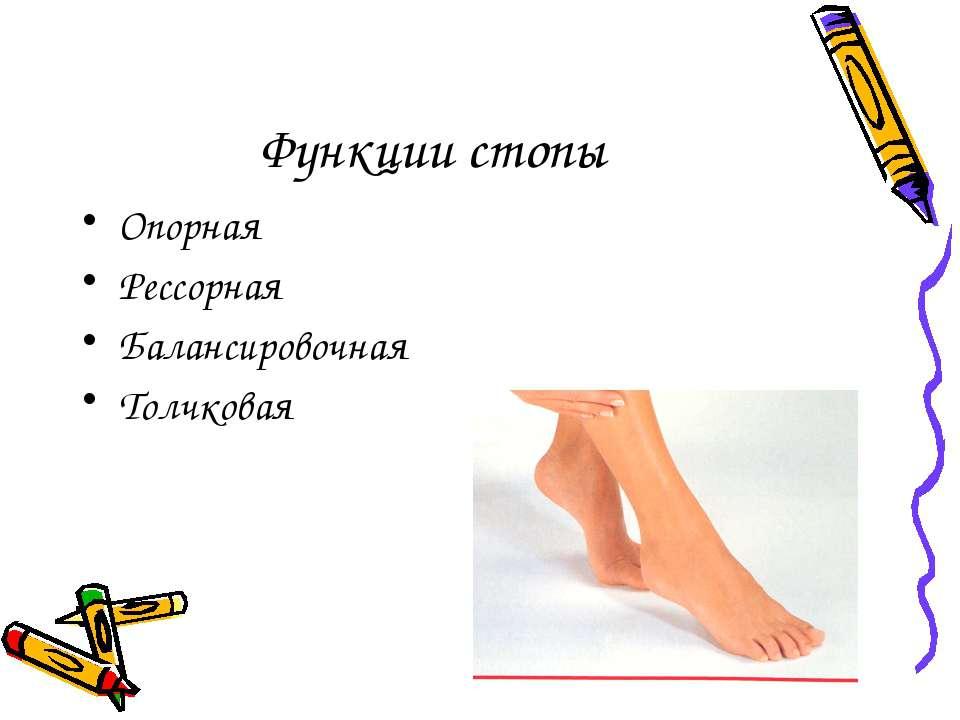 Функции стопы Опорная Рессорная Балансировочная Толчковая