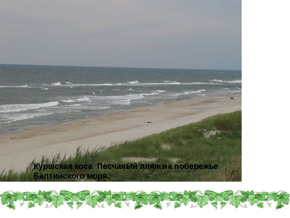 Куршская коса Песчаный пляж на побережье Балтийского моря.