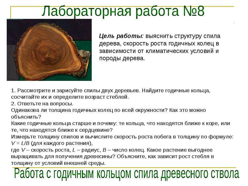 Цель работы: выяснить структуру спила дерева, скорость роста годичных колец в...
