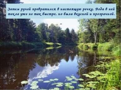 Затем ручей превратился в настоящую речку. Вода в ней текла уже не так быстро...
