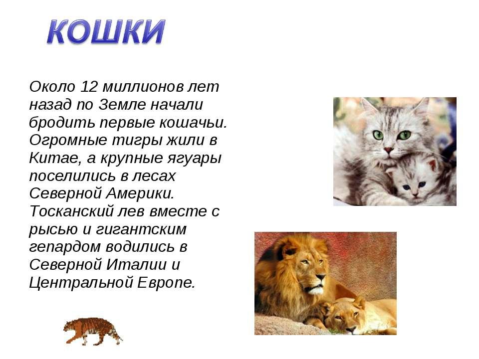 Около 12 миллионов лет назад по Земле начали бродить первые кошачьи. Огромные...