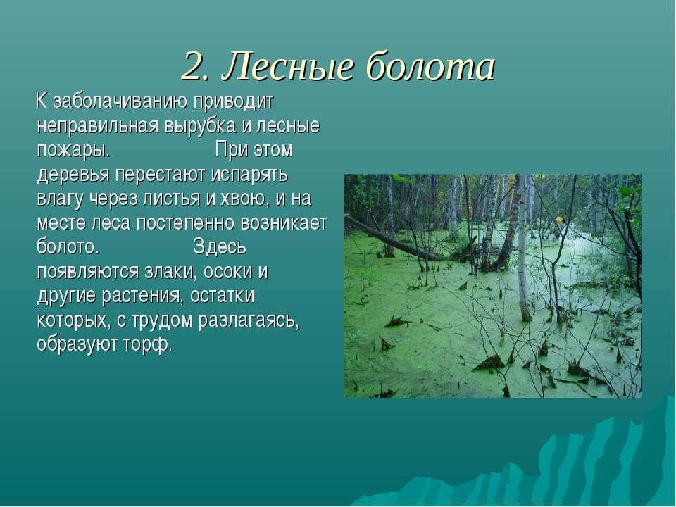 2. Лесные болота К заболачиванию приводит неправильная вырубка и лесные пожар...