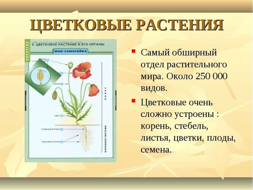 ЦВЕТКОВЫЕ РАСТЕНИЯ Самый обширный отдел растительного мира. Около 250 000 вид...