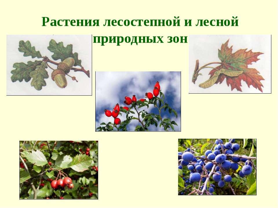 Растения лесостепной и лесной природных зон