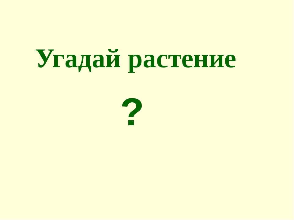 Угадай растение ?