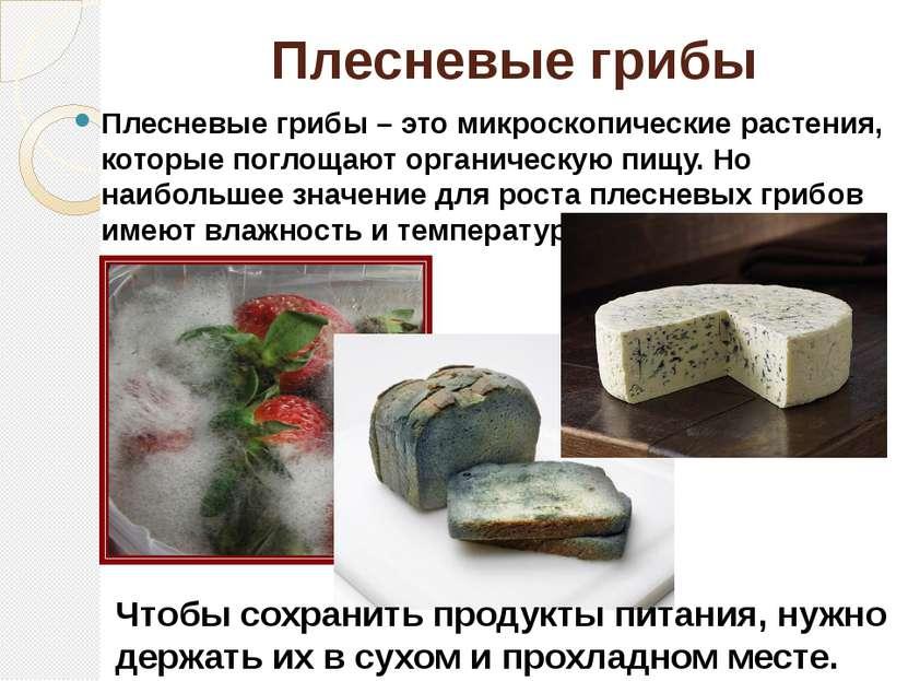 Плесневыегрибы Плесневые грибы– это микроскопические растения, которые погл...