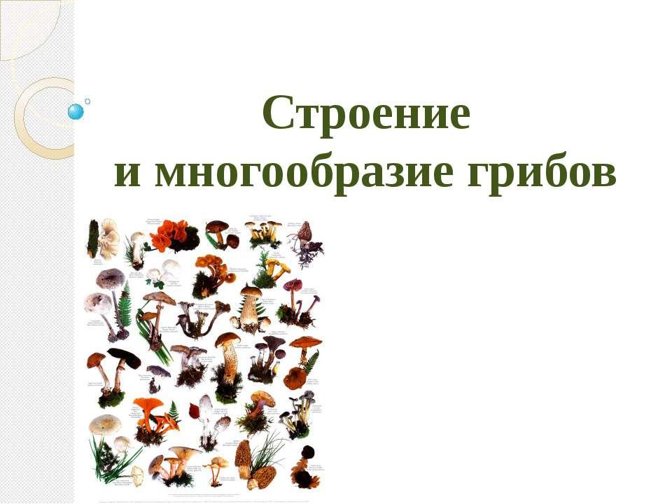 Строение и многообразие грибов