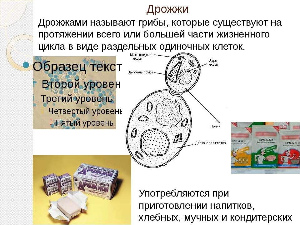 Дрожжи Дрожжами называют грибы, которые существуют на протяжении всего или бо...