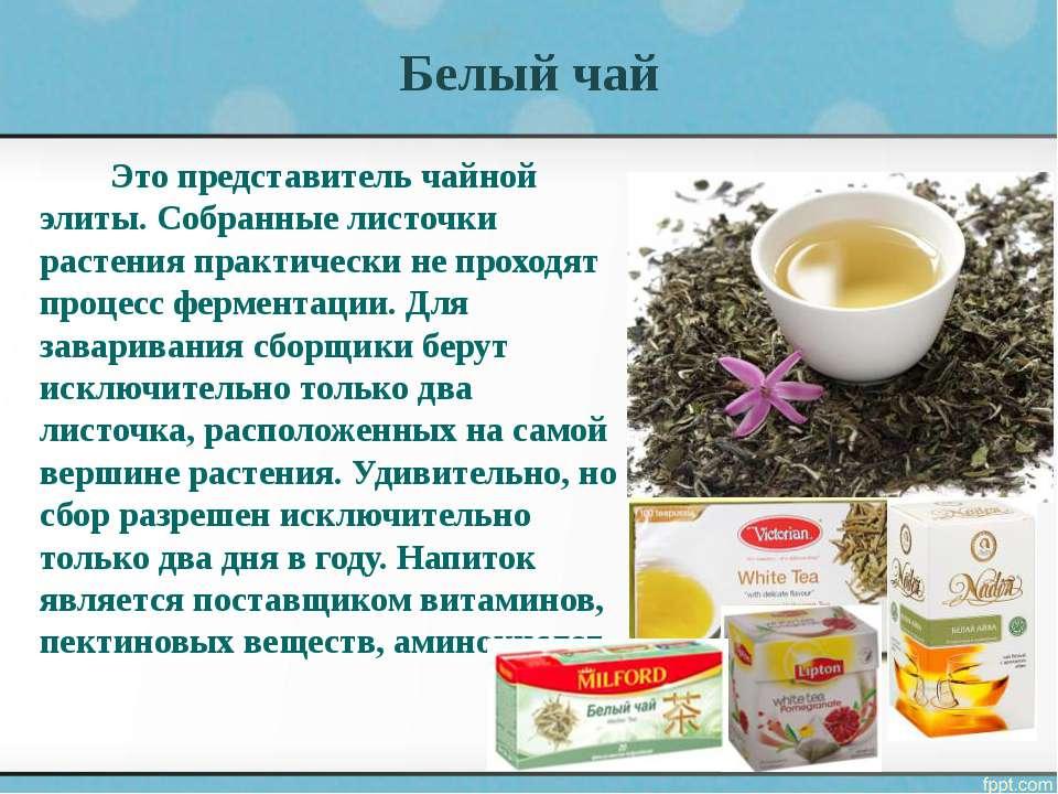Белый чай Это представитель чайной элиты. Собранные листочки растения практич...
