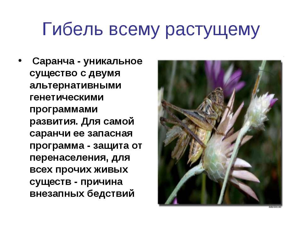 Гибель всему растущему Саранча - уникальное существо с двумя альтернативными ...