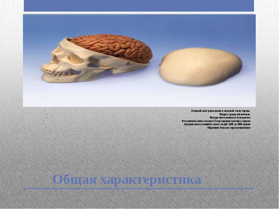 Общая характеристика Головной мозг расположен в мозговой части черепа. Покрыт...