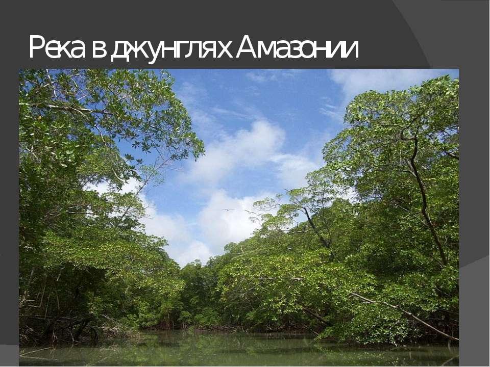 Река в джунглях Амазонии