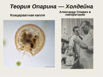 Теория Опарина — Холдейна Коацерватная капля Александр Опарин в лаборатории