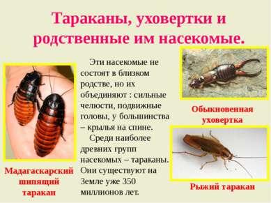 Тараканы, уховертки и родственные им насекомые. Эти насекомые не состоят в бл...