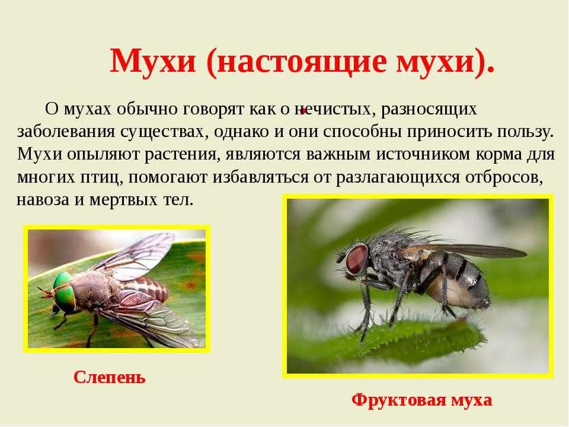 Мухи (настоящие мухи). . О мухах обычно говорят как о нечистых, разносящих за...