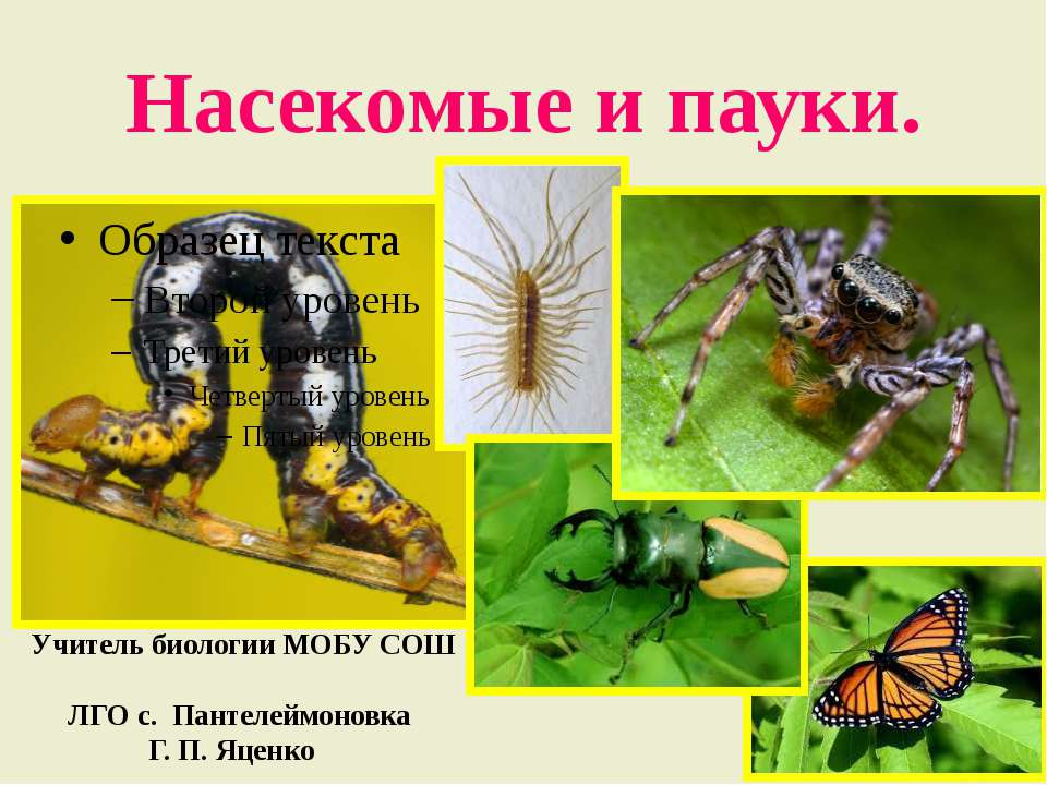 Насекомые и пауки. Учитель биологии МОБУ СОШ ЛГО с. Пантелеймоновка Г. П. Яценко