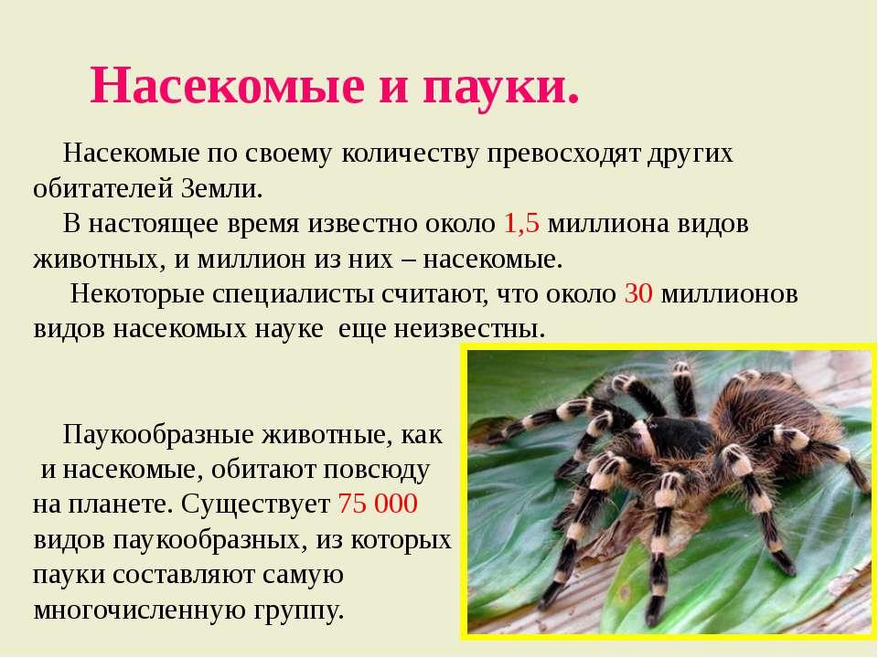 Насекомые и пауки. Насекомые по своему количеству превосходят других обитател...