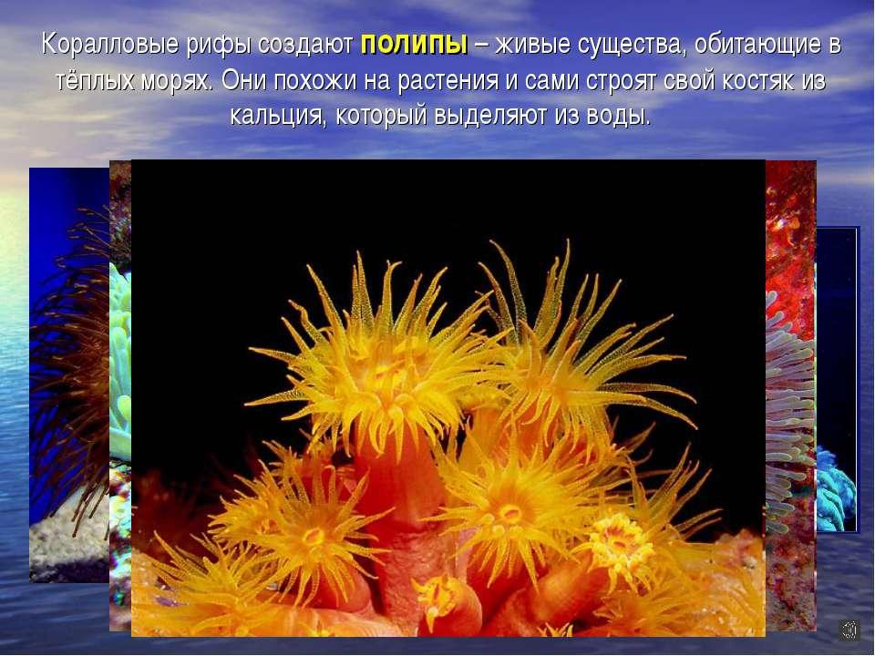 Коралловые рифы создают полипы – живые существа, обитающие в тёплых морях. Он...