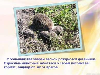 У большинства зверей весной рождаются детёныши. Взрослые животные заботятся о...