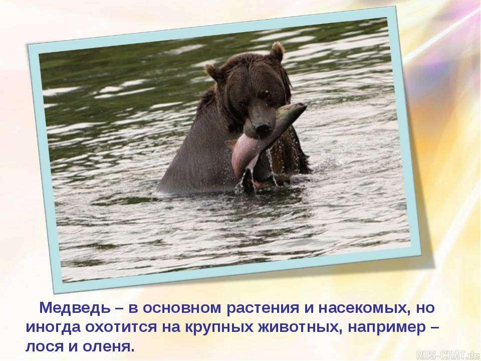 Медведь – в основном растения и насекомых, но иногда охотится на крупных живо...
