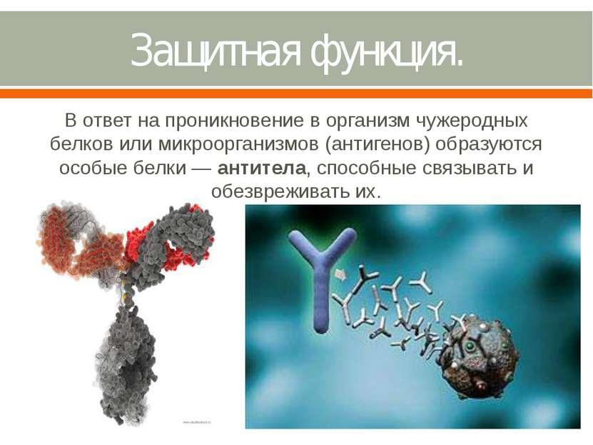 Защитная функция. В ответ на проникновение в организм чужеродных белков или м...