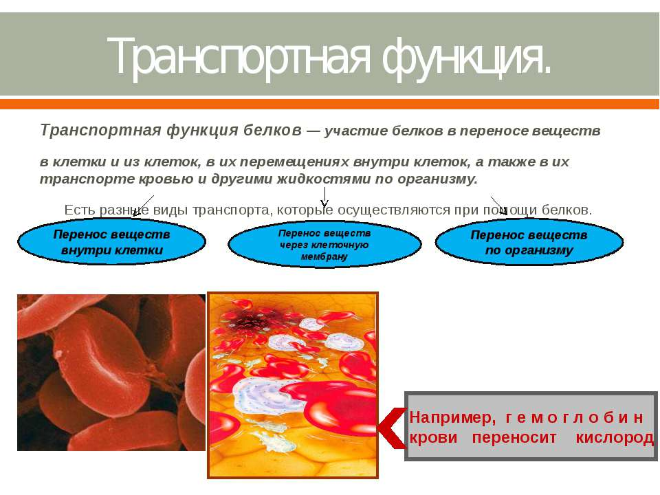 Транспортная функция. Транспортная функция белков — участие белков в переносе...