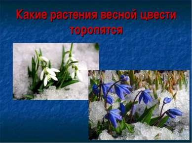 Какие растения весной цвести торопятся