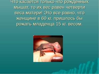 Что касается только что рожденных мышат, то их вес равен четверти веса матери...