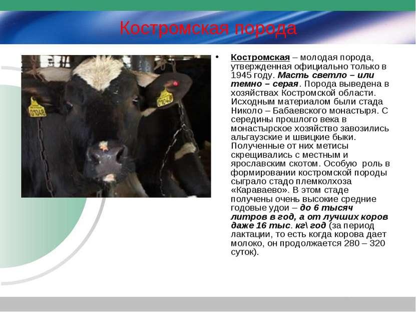Костромская порода Костромская – молодая порода, утвержденная официально толь...