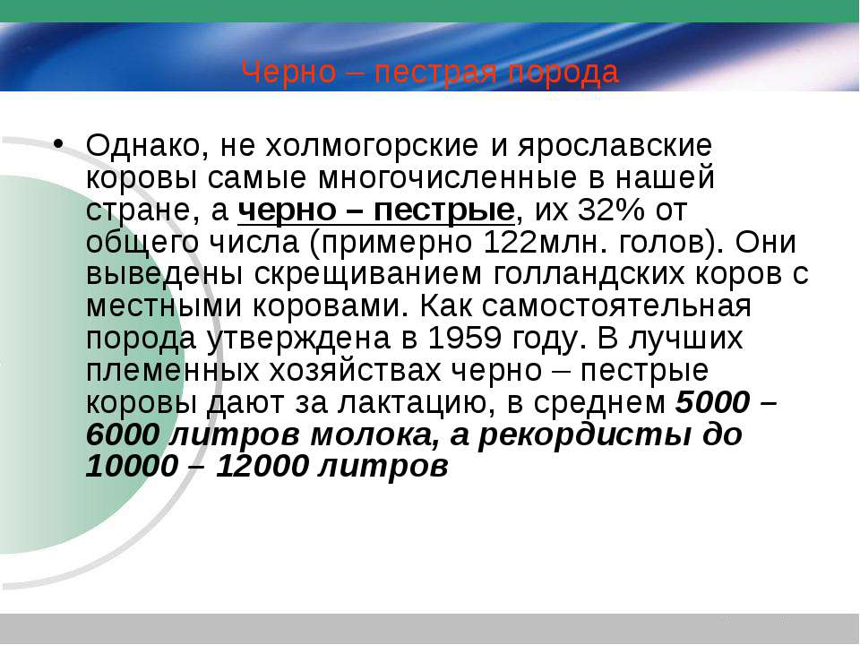 Черно – пестрая порода Однако, не холмогорские и ярославские коровы самые мно...