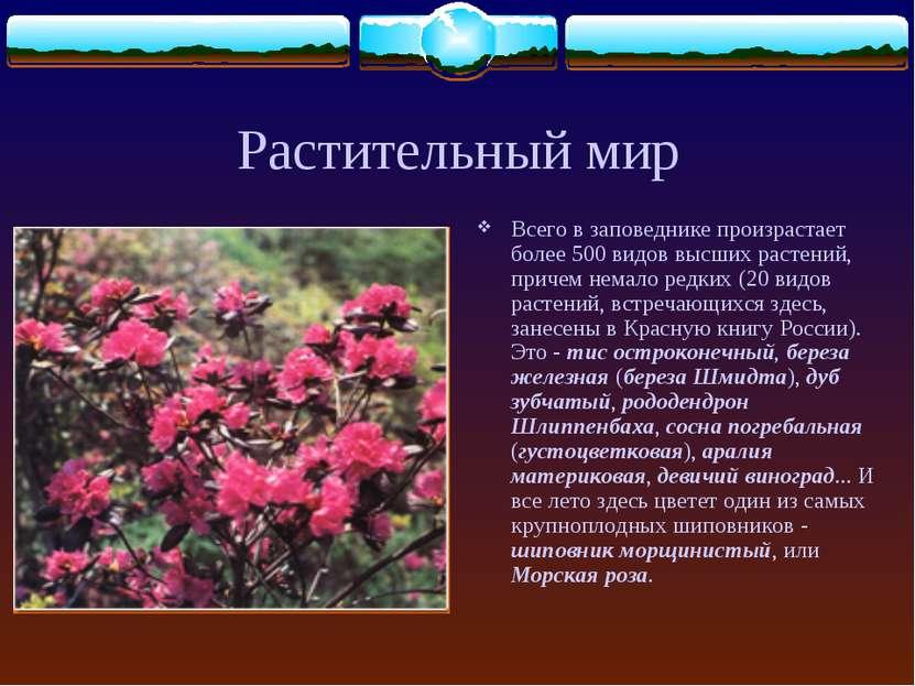 Растительный мир Всего в заповеднике произрастает более 500 видов высших раст...