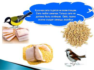 Кусочки сала годятся не всем птицам. Сало любят синички. Только сало не должн...