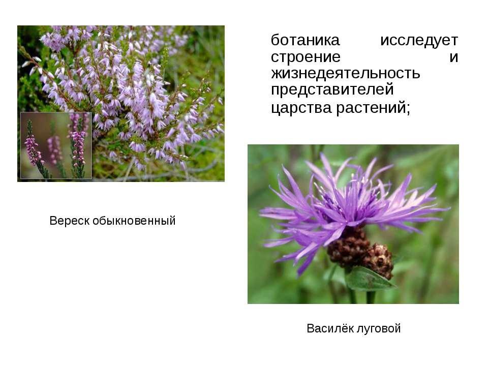 ботаника исследует строение и жизнедеятельность представителей царства растен...