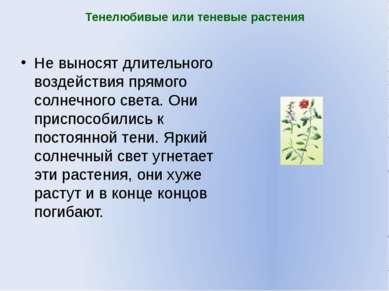 Тенелюбивые или теневые растения Не выносят длительного воздействия прямого с...