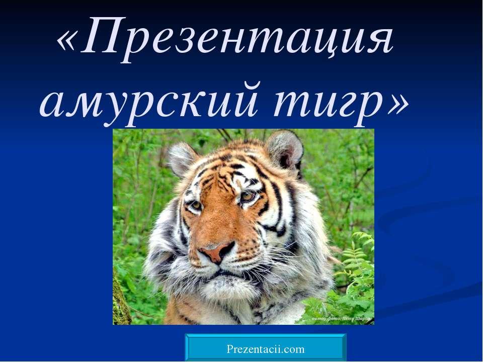 «Презентация амурский тигр»