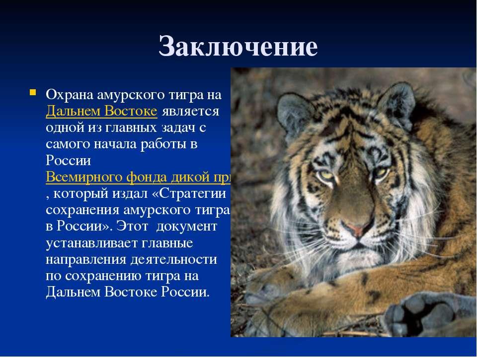 Заключение Охрана амурского тигра на Дальнем Востоке является одной из главны...