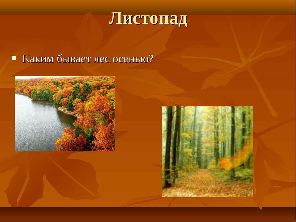 Листопад Каким бывает лес осенью?