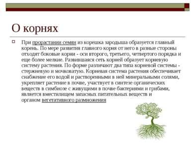 О корнях Припрорастании семяниз корешка зародыша образуется главный корень....