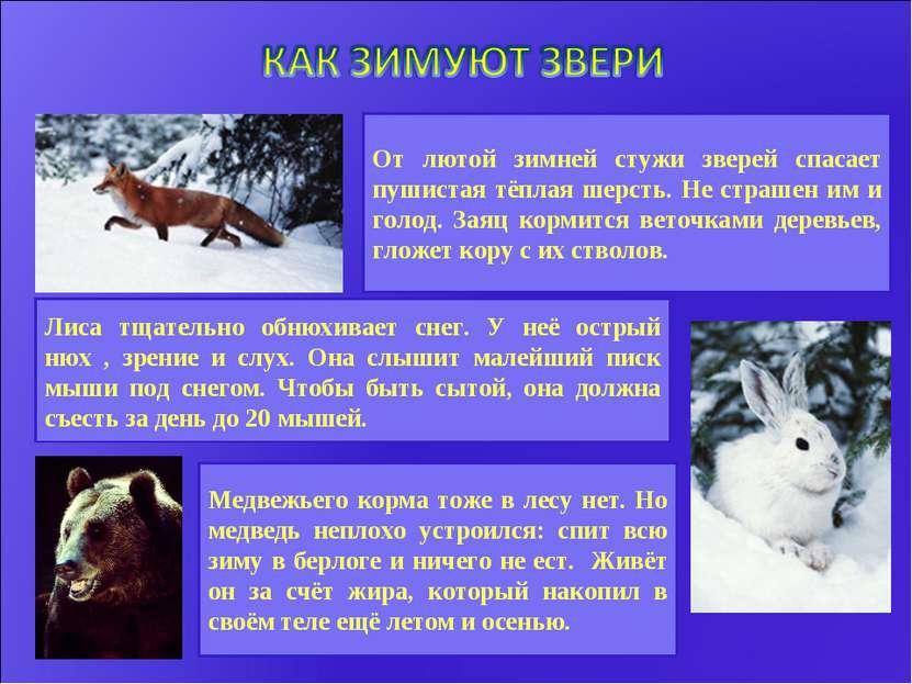 От лютой зимней стужи зверей спасает пушистая тёплая шерсть. Не страшен им и ...