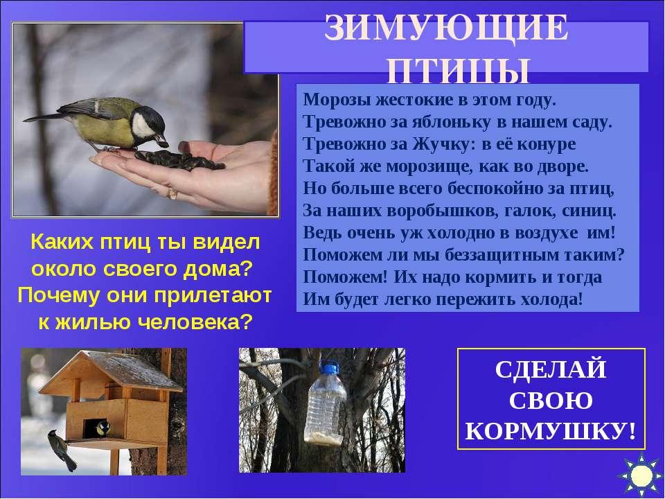 Каких птиц ты видел около своего дома? Почему они прилетают к жилью человека?...
