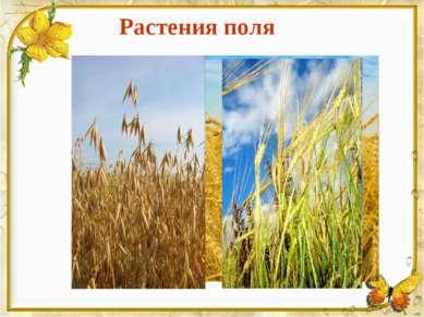Растения поля