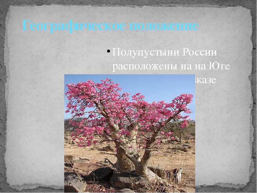 Полупустыни России расположены на на Юге Прикаспии и Кавказе Географическое п...