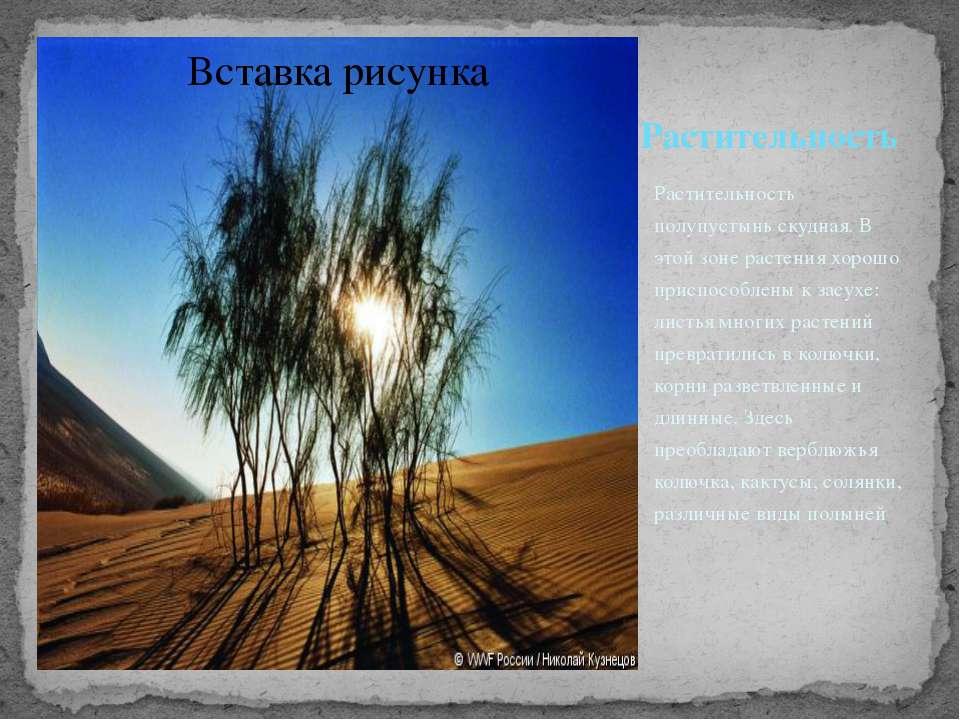 Растительность Растительность полупустынь скудная. В этой зоне растения хорош...