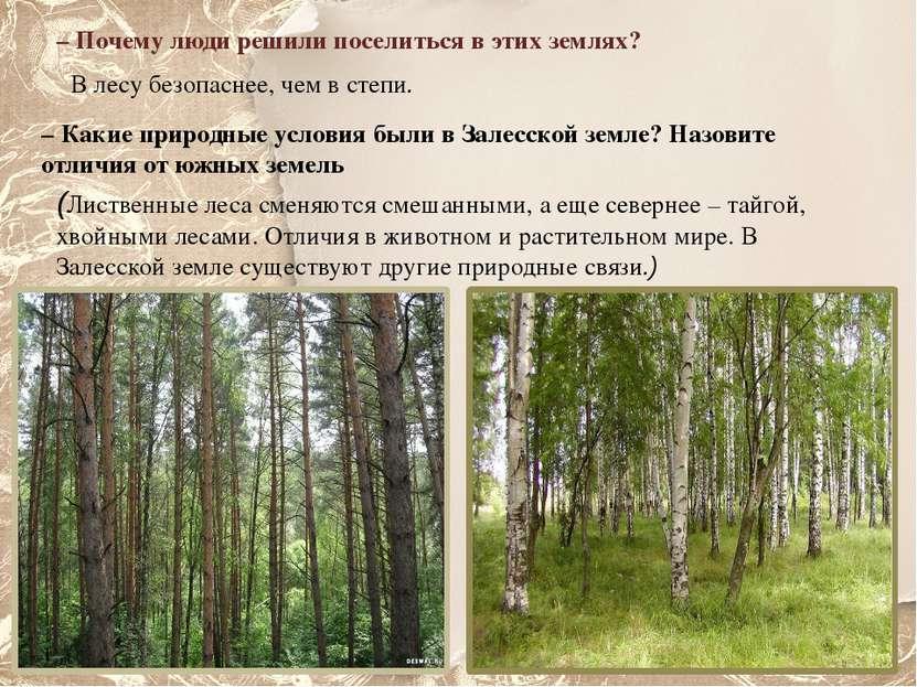 – Почему люди решили поселиться в этих землях? В лесу безопаснее, чем в степи...