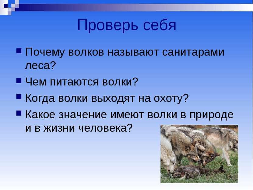 Проверь себя Почему волков называют санитарами леса? Чем питаются волки? Когд...