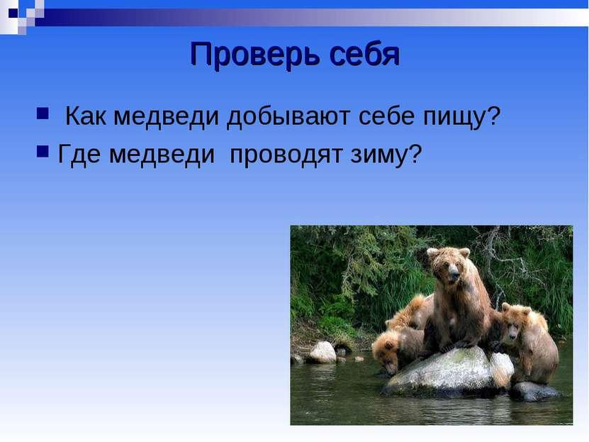 Проверь себя Как медведи добывают себе пищу? Где медведи проводят зиму?