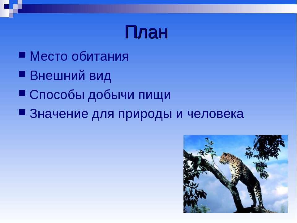 План Место обитания Внешний вид Способы добычи пищи Значение для природы и че...